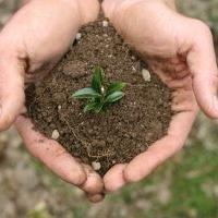 mains reccueillant de la terre et une jeune pousse